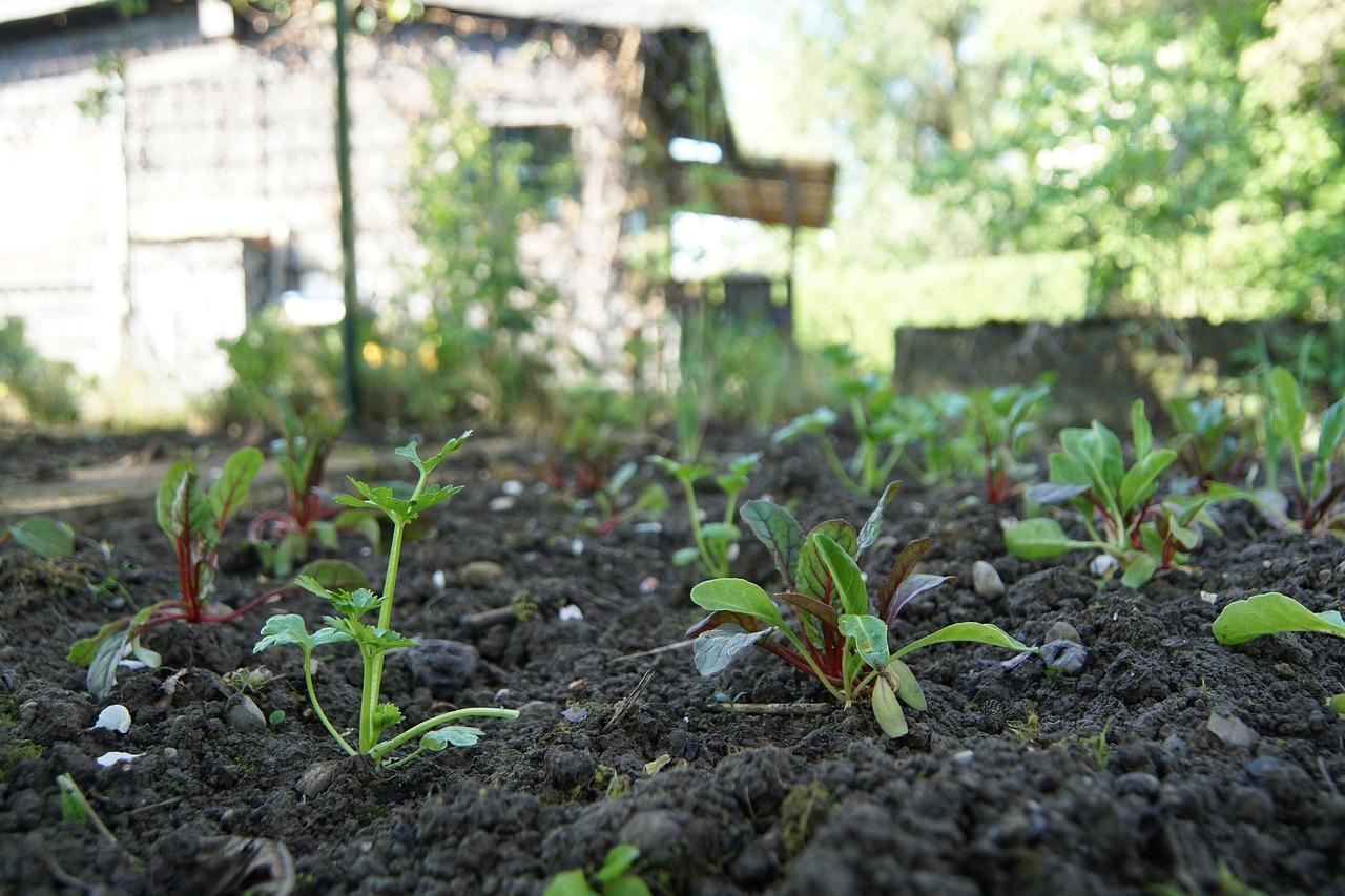 Gemüse und Obst aus dem Kleingarten